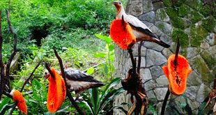 Kuala Lumpur Bird Park – Famous Attractions and Exhibits You Should Know About
