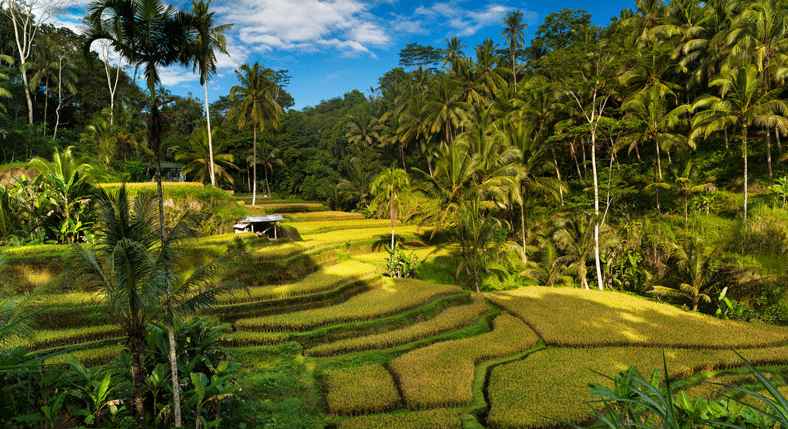 Tegallalang-Rice-Terraces-in-bali