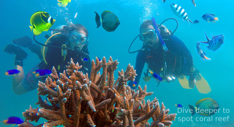 Dive deeper to spot coral reef