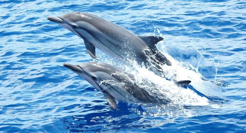 Dolphin-Watching-at-Lovina-Beach