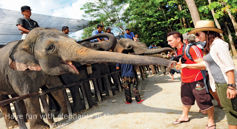 Have fun with elephants in the river