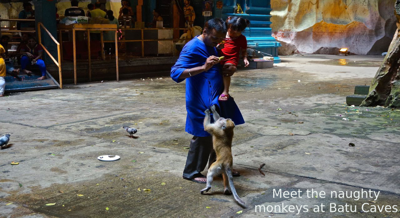 Meet the naughty monkeys at Batu Caves