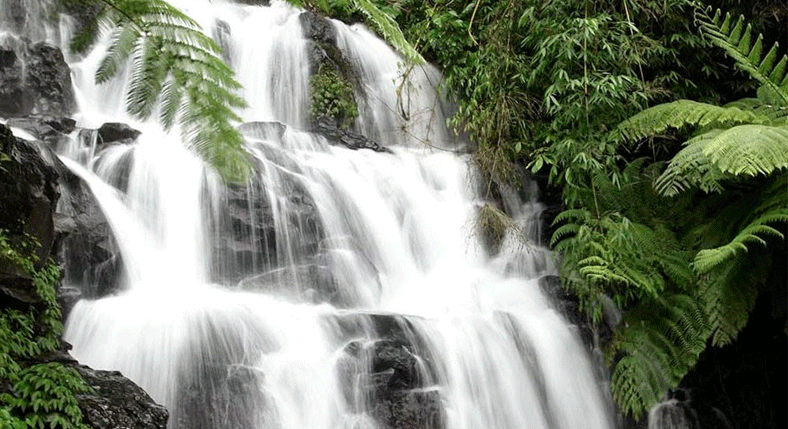 Visit-the-most-peaceful-waterfall-in-Bali