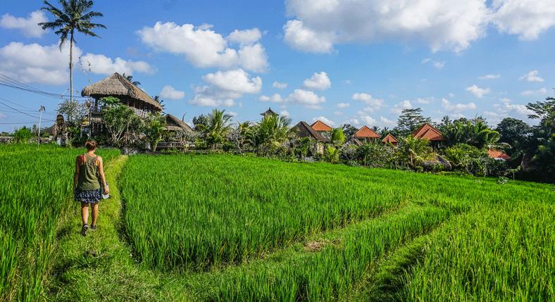 Walk-along-the-paddy-fields