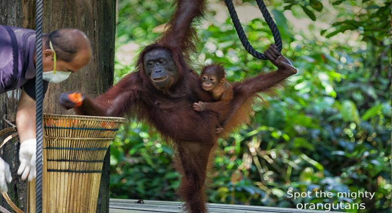 naughty monkeys at Batu Caves